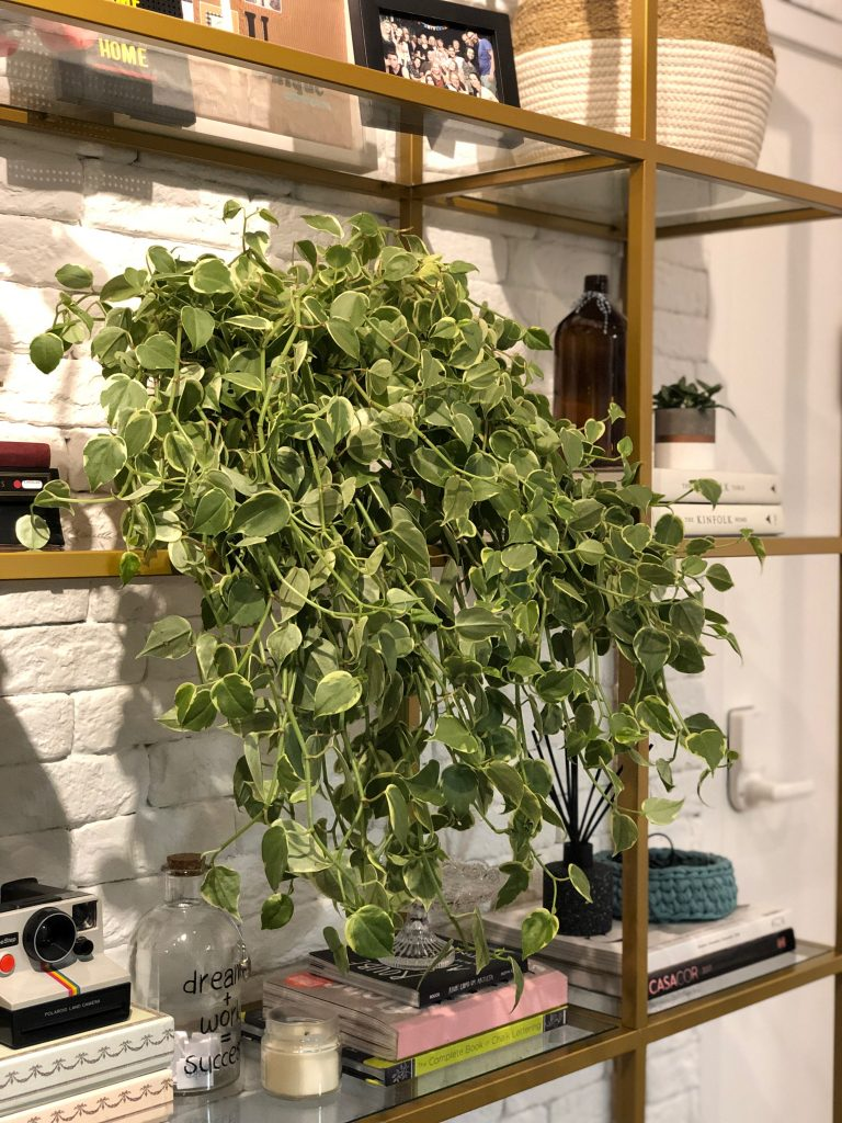 plantas para apartamento apto 161 dicas flores decoração