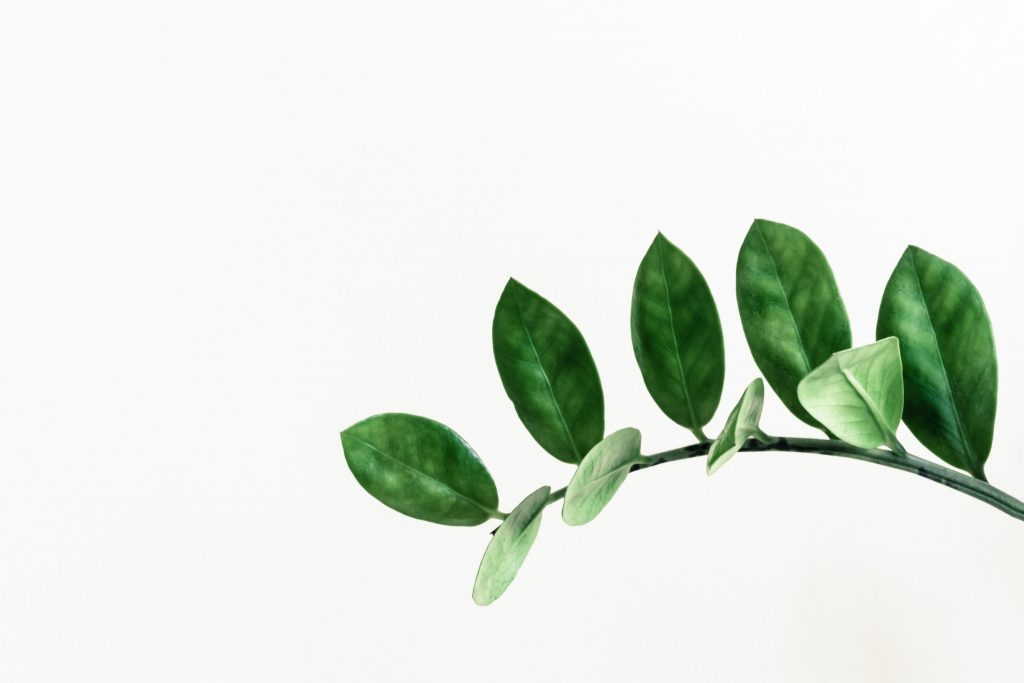 plantas para apartamento zamioculca verde