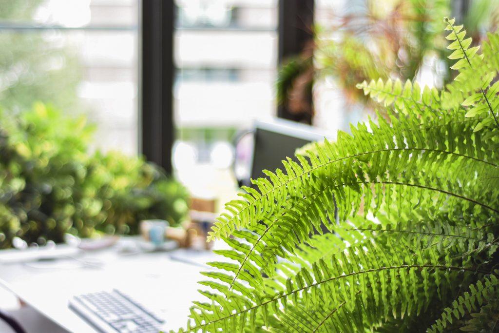 plantas para apartamento samambaia verde flores decoração de interiores