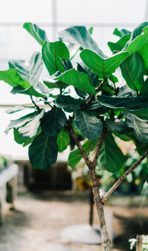 plantas para apartamento zamioculca plantas verde árvore em casa mini árvore decoração de interiores