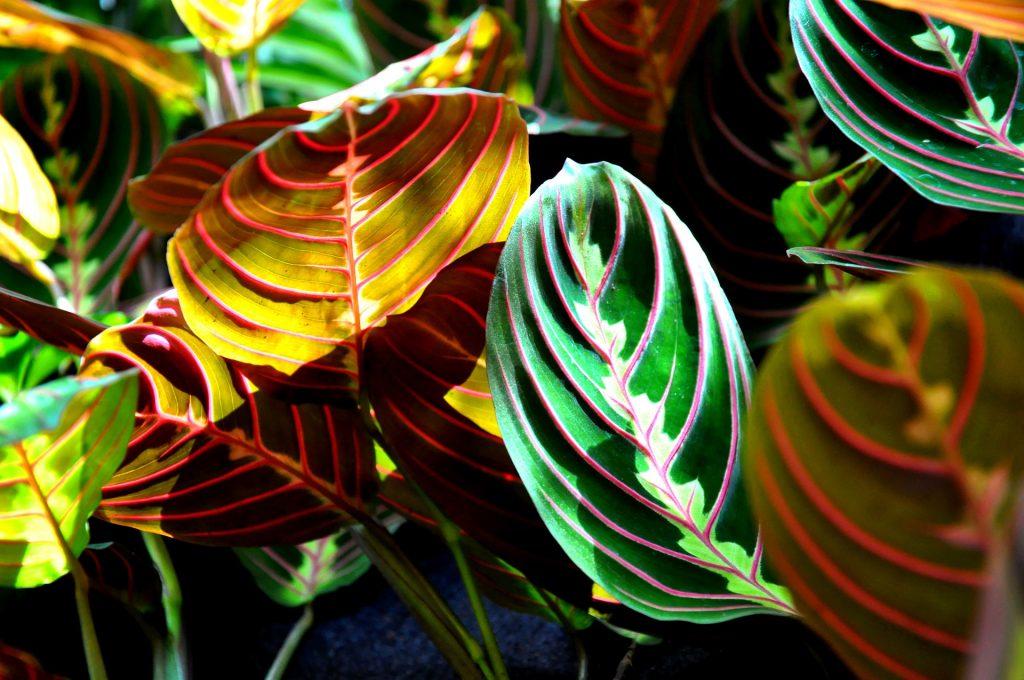 plantas para apartamento maranta decoração de interiores