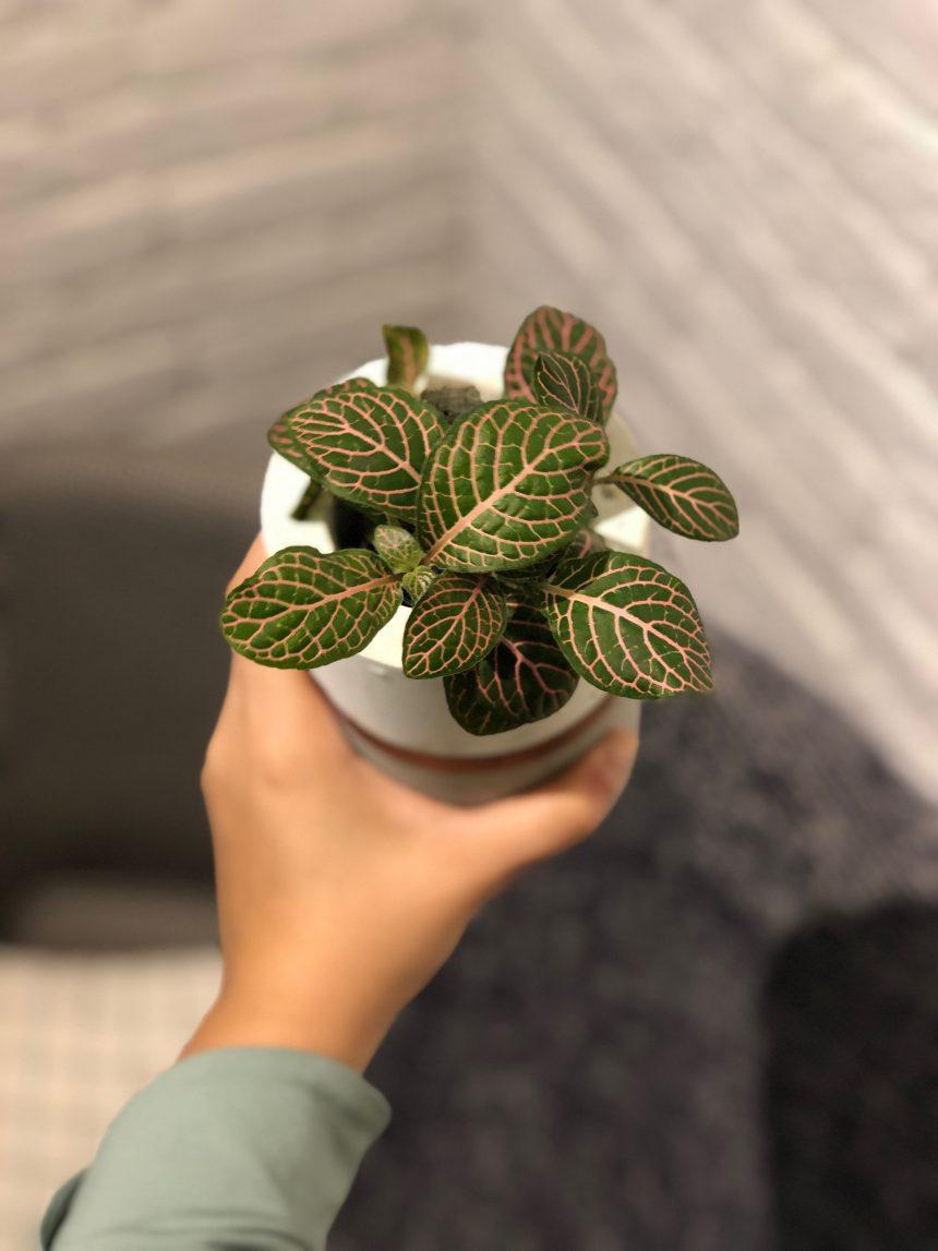 7 Plantas para apartamento + dicas de como cuidar